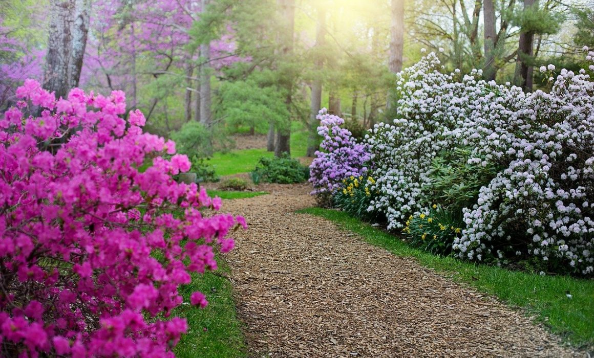 ogrod wiosna
